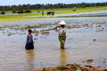 Walking in the rice paddies