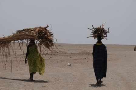 Turkana women transporting wood