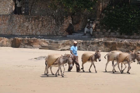 Donkeys on the beach...